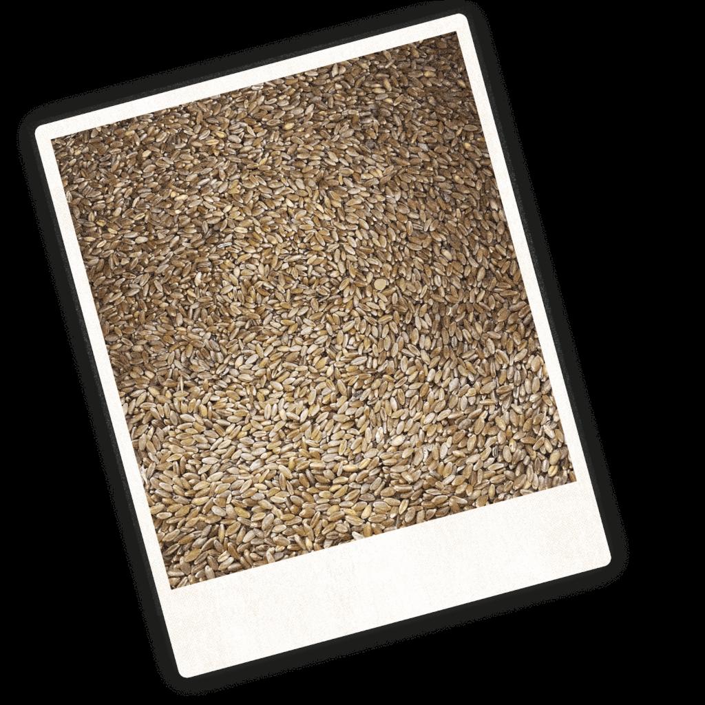 molitoria umbra - grano